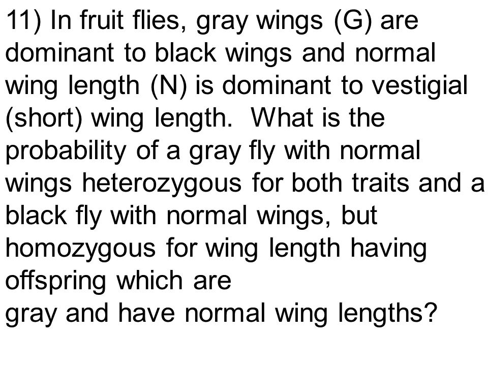 11) In fruit flies, gray wings (G) are