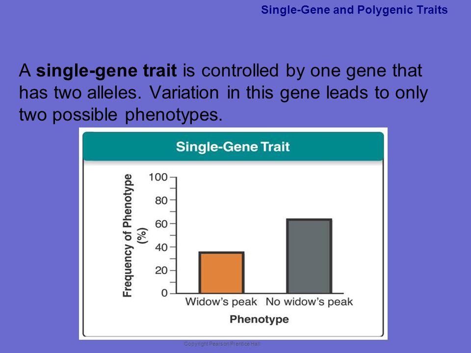 Single-Gene and Polygenic Traits