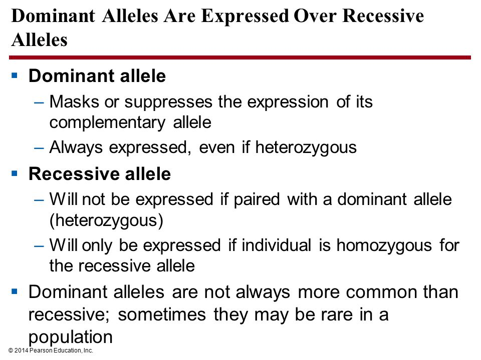 Dominant Alleles Are Expressed Over Recessive Alleles