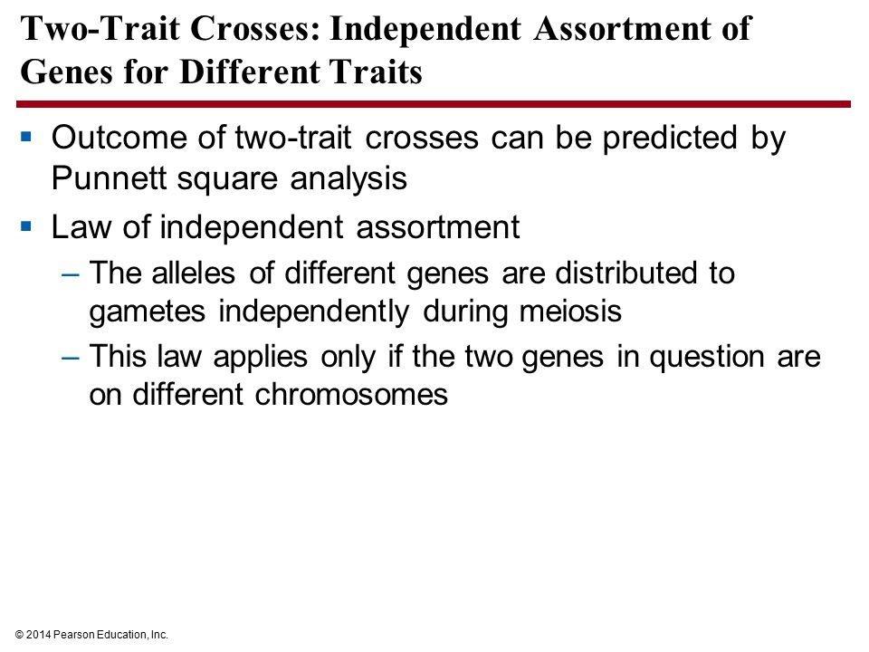 Two-Trait Crosses: Independent Assortment of Genes for Different Traits