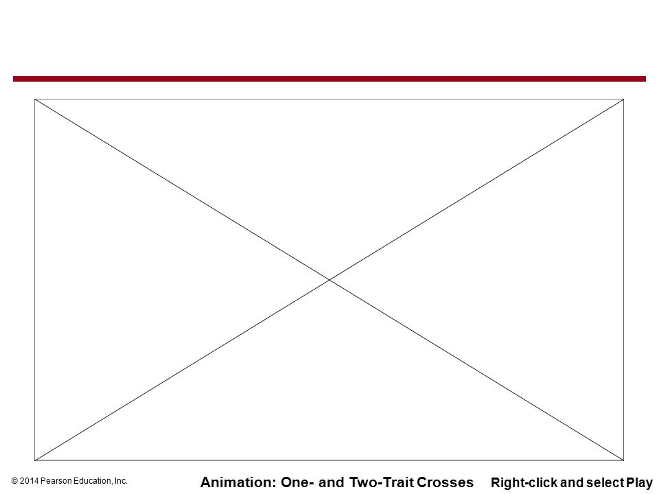 Animation: One- and Two-Trait Crosses Right-click and select Play