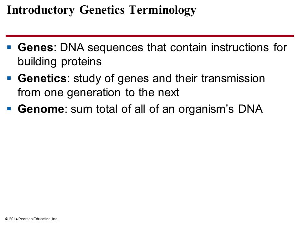 Introductory Genetics Terminology