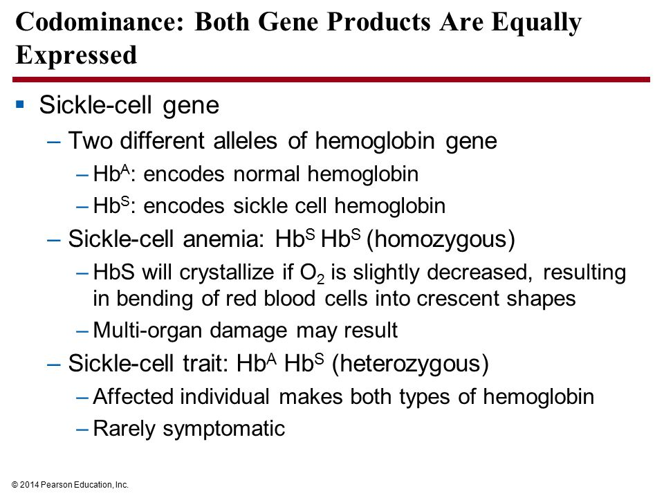 Codominance: Both Gene Products Are Equally Expressed