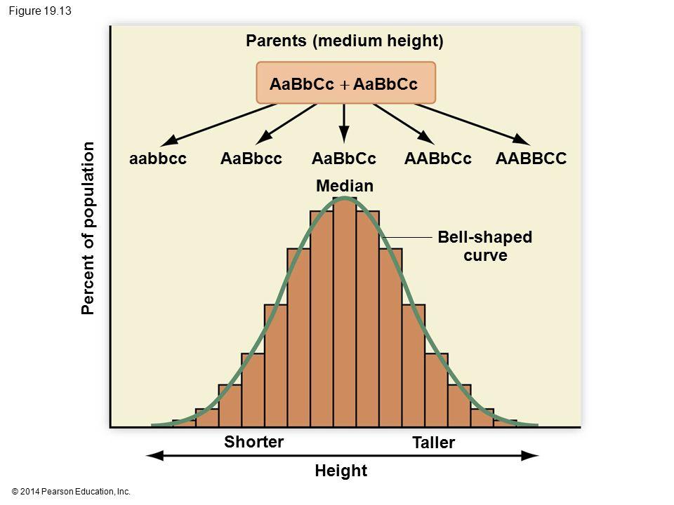 Parents (medium height)