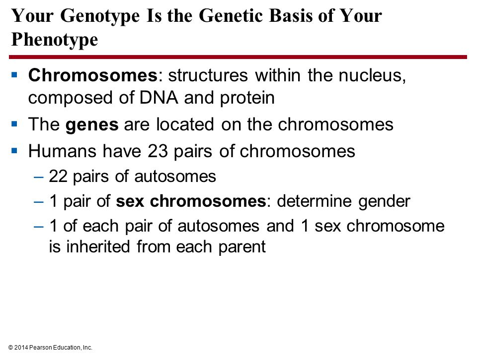 Your Genotype Is the Genetic Basis of Your Phenotype