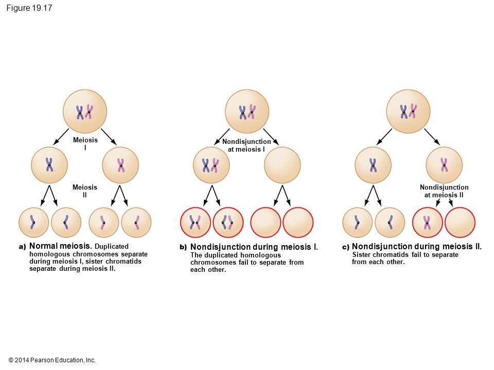 Nondisjunction at meiosis I Nondisjunction at meiosis II