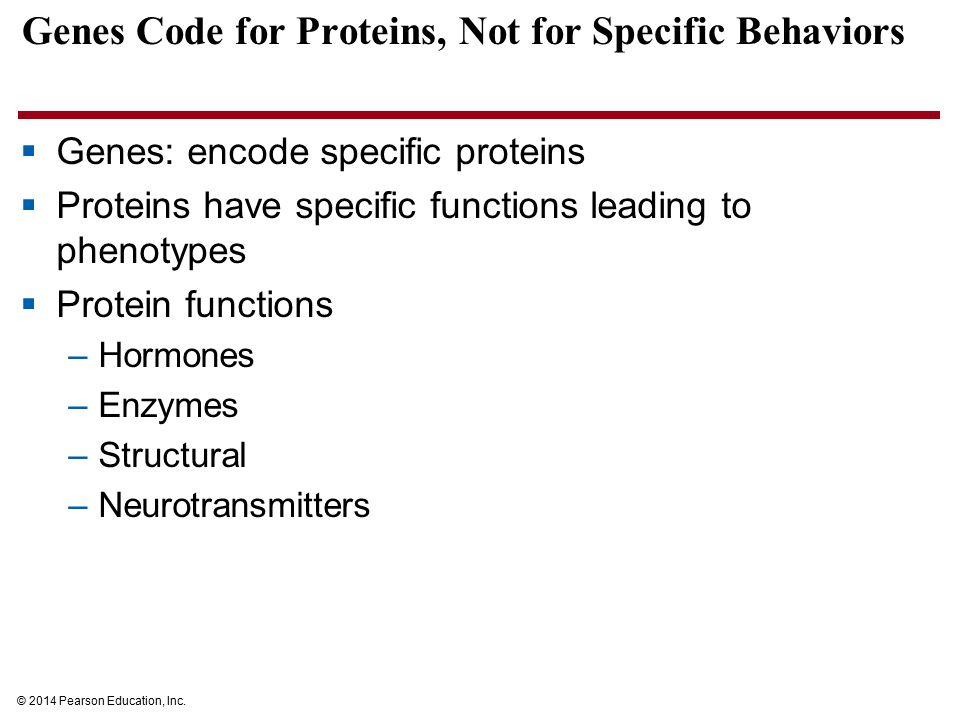 Genes Code for Proteins, Not for Specific Behaviors