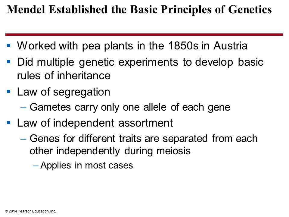 Mendel Established the Basic Principles of Genetics