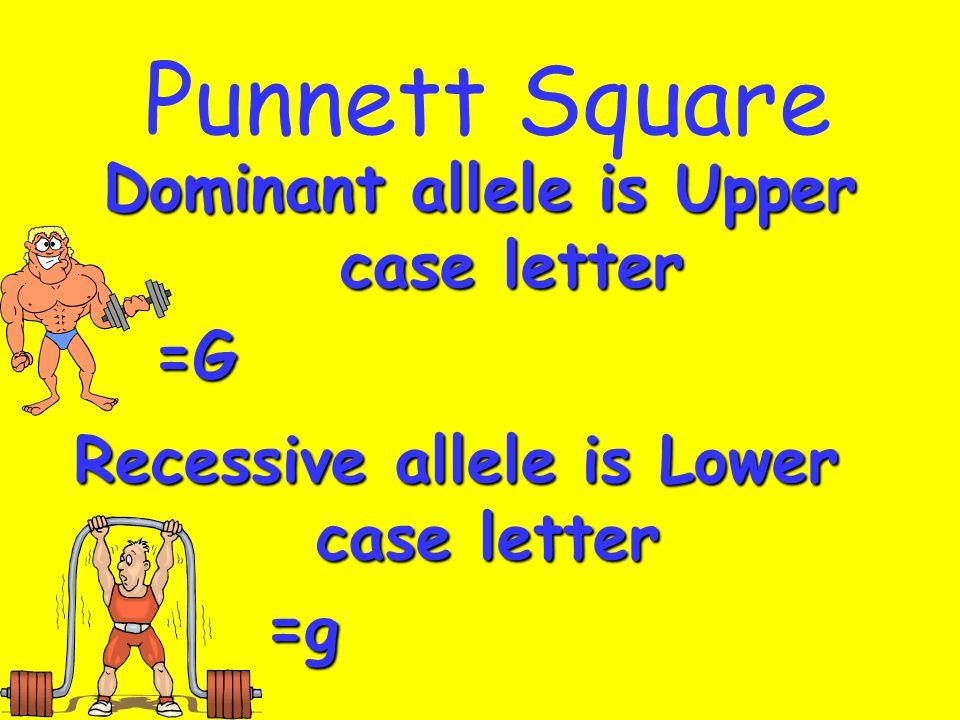 Punnett Square Dominant allele is Upper case letter =G