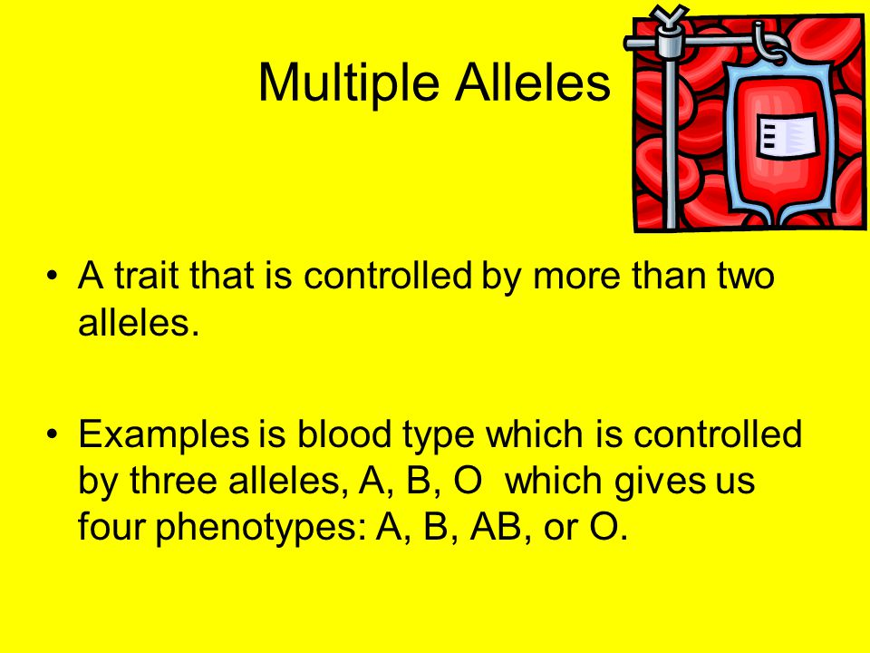 Multiple Alleles A trait that is controlled by more than two alleles.