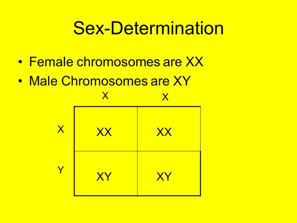 Sex-Determination Female chromosomes are XX Male Chromosomes are XY XX