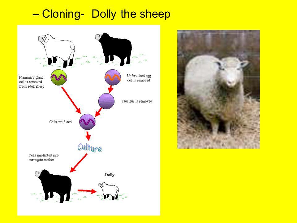 Cloning- Dolly the sheep