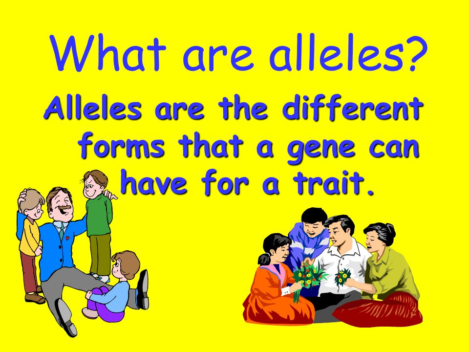 Alleles are the different forms that a gene can have for a trait.