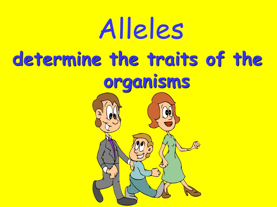determine the traits of the organisms