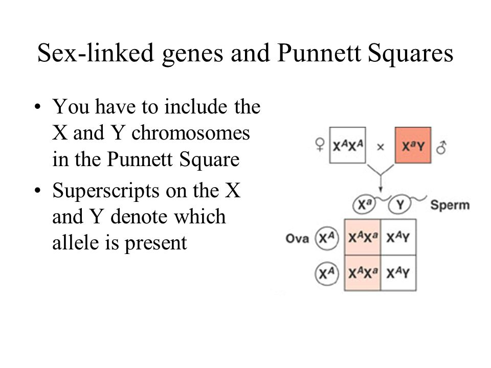 Sex-linked genes and Punnett Squares