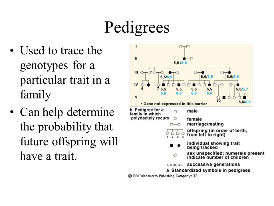 Pedigrees Used to trace the genotypes for a particular trait in a family.