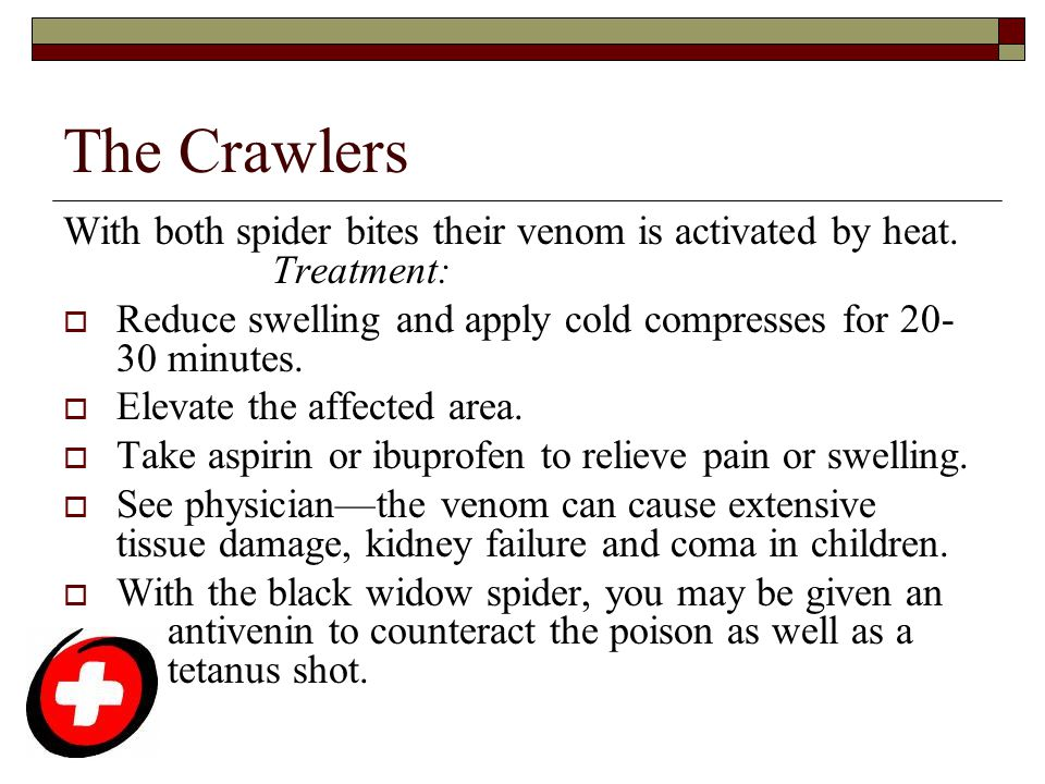 The Crawlers With both spider bites their venom is activated by heat. Treatment: Reduce swelling and apply cold compresses for 20-30 minutes.