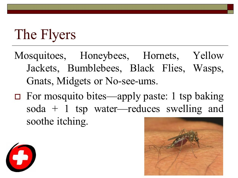 The Flyers Mosquitoes, Honeybees, Hornets, Yellow Jackets, Bumblebees, Black Flies, Wasps, Gnats, Midgets or No-see-ums.