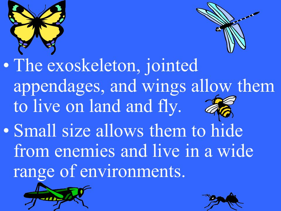 The exoskeleton, jointed appendages, and wings allow them to live on land and fly.