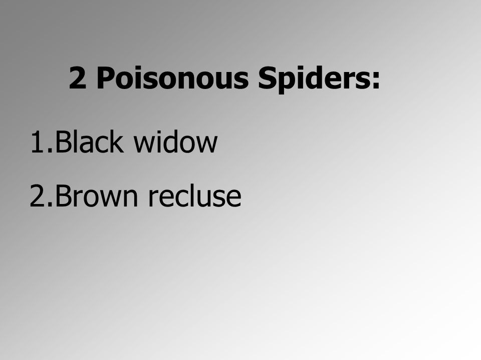 2 Poisonous Spiders: Black widow Brown recluse