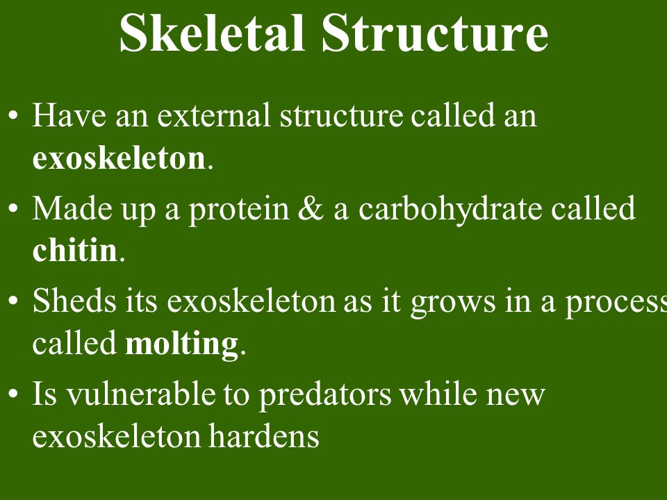Skeletal Structure Have an external structure called an exoskeleton.