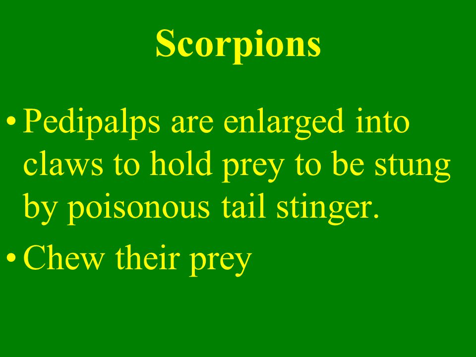Scorpions Pedipalps are enlarged into claws to hold prey to be stung by poisonous tail stinger.