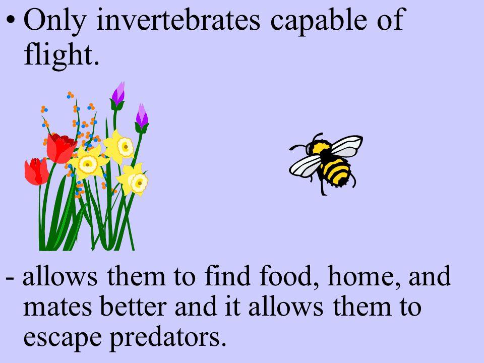 Only invertebrates capable of flight.