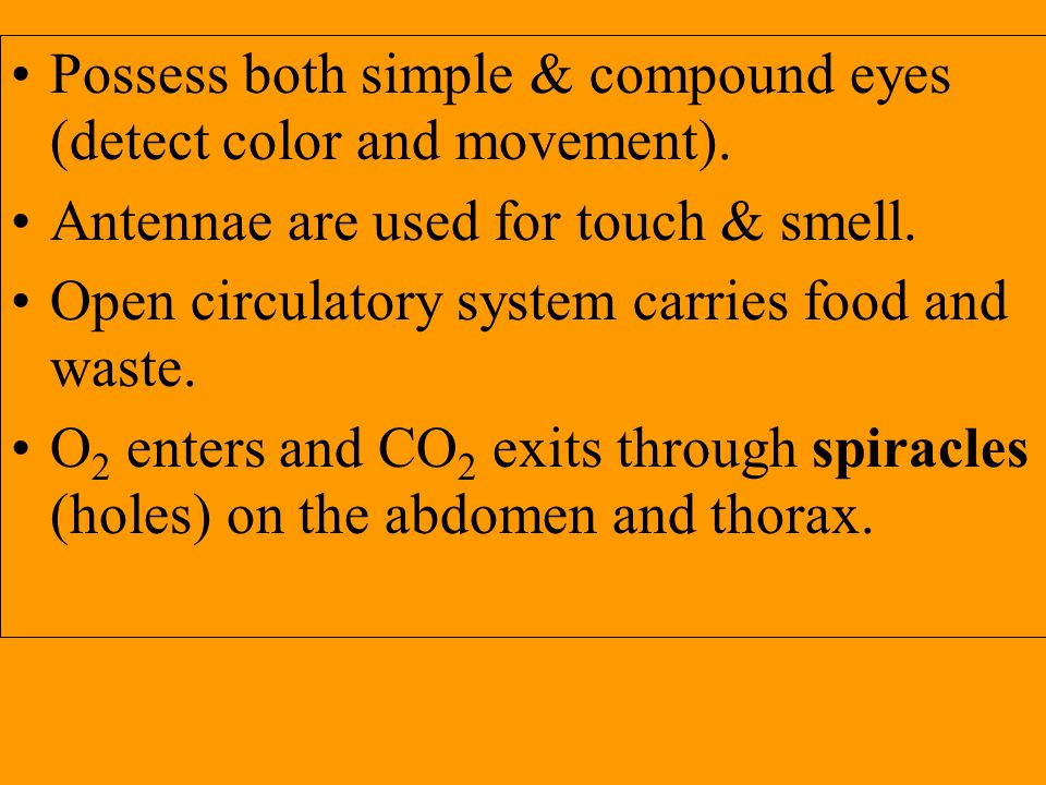 Possess both simple & compound eyes (detect color and movement).