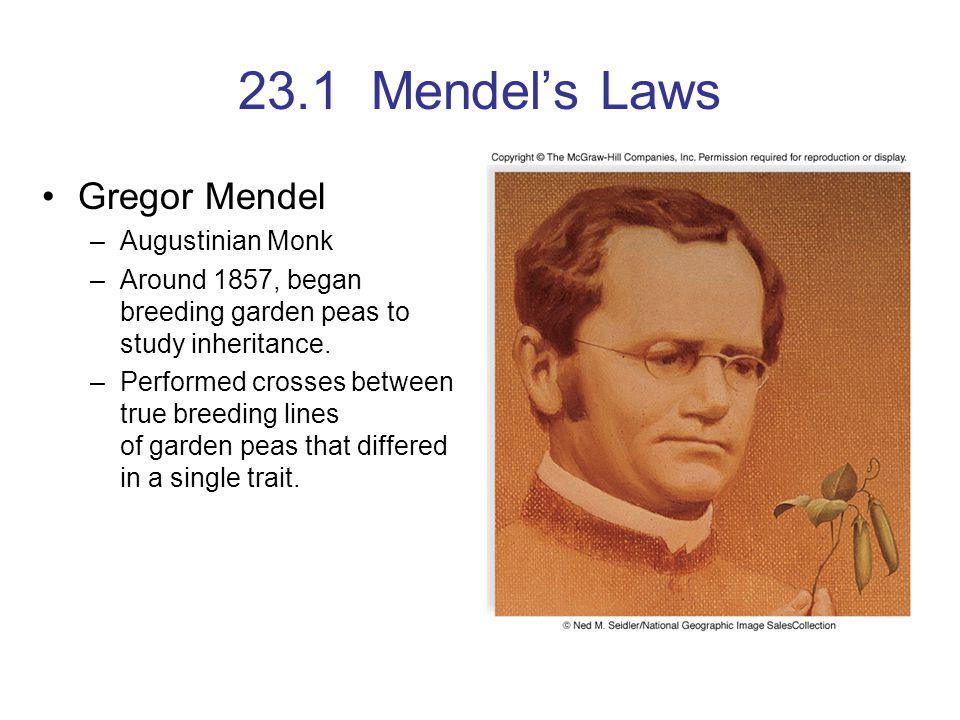 23.1 Mendel's Laws Gregor Mendel Augustinian Monk