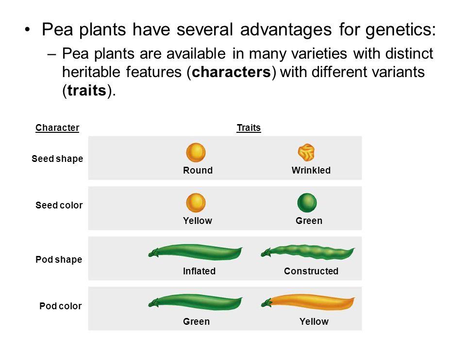 Pea plants have several advantages for genetics: