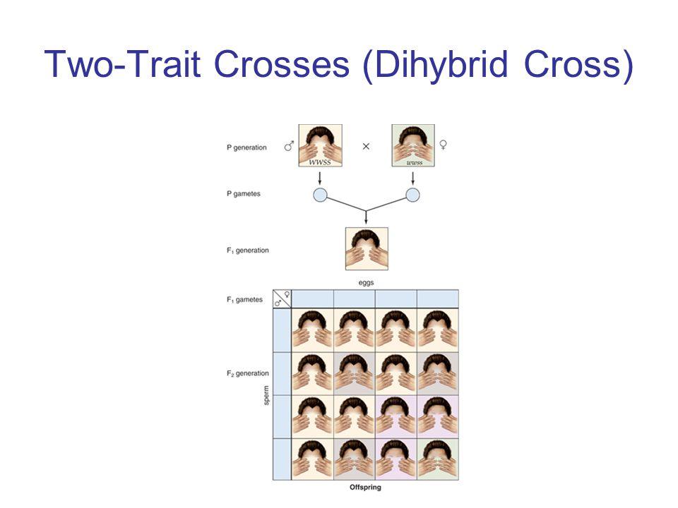 Two-Trait Crosses (Dihybrid Cross)
