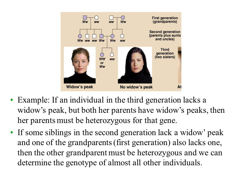 Example: If an individual in the third generation lacks a widow's peak, but both her parents have widow's peaks, then her parents must be heterozygous for that gene.