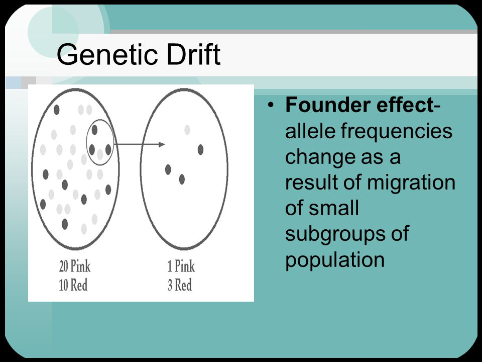 Genetic Drift Founder effect- allele frequencies change as a result of migration of small subgroups of population.