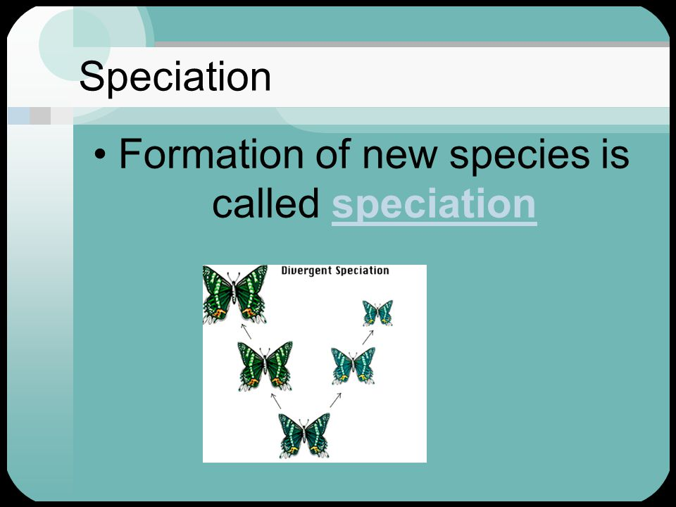 Formation of new species is called speciation