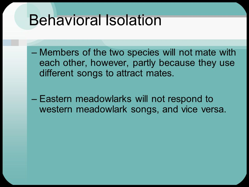 Behavioral Isolation Members of the two species will not mate with each other, however, partly because they use different songs to attract mates.