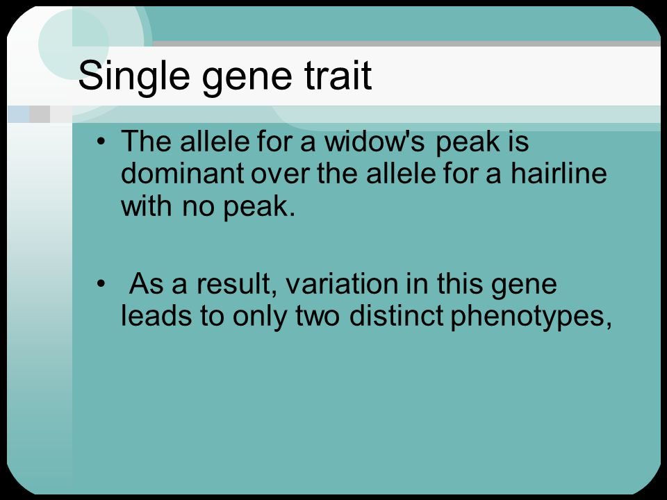 Single gene trait The allele for a widow s peak is dominant over the allele for a hairline with no peak.
