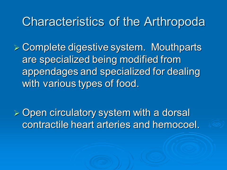 Characteristics of the Arthropoda
