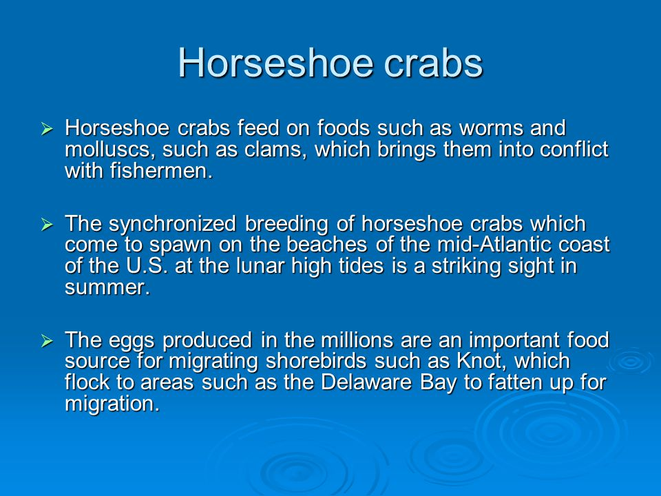 Horseshoe crabs Horseshoe crabs feed on foods such as worms and molluscs, such as clams, which brings them into conflict with fishermen.