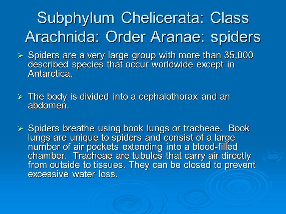 Subphylum Chelicerata: Class Arachnida: Order Aranae: spiders