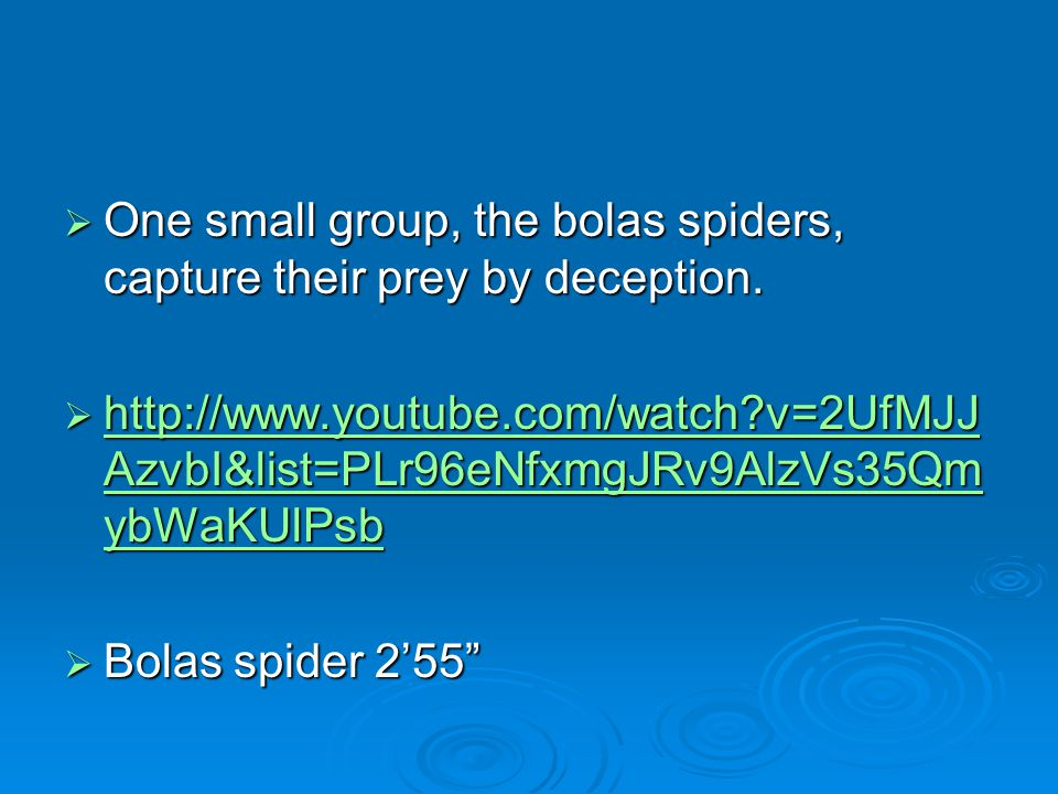 One small group, the bolas spiders, capture their prey by deception.