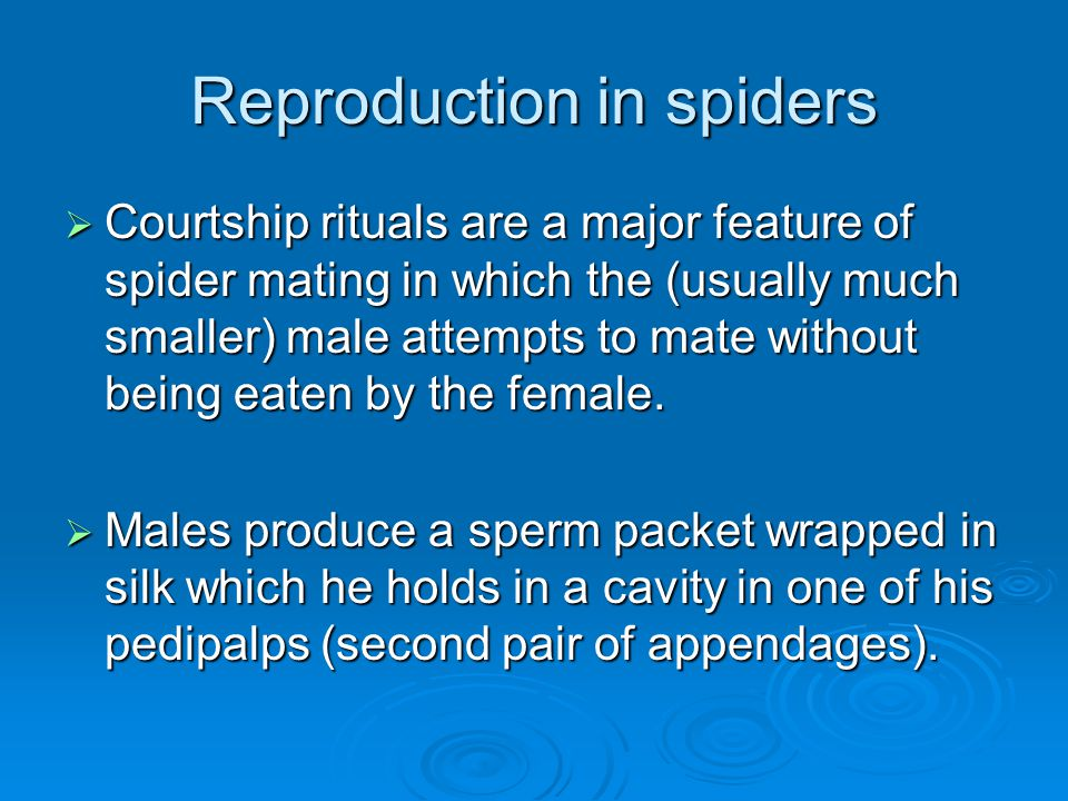 Reproduction in spiders