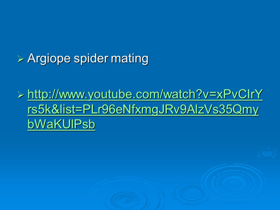 Argiope spider mating http://www.youtube.com/watch v=xPvCIrYrs5k&list=PLr96eNfxmgJRv9AlzVs35QmybWaKUlPsb.