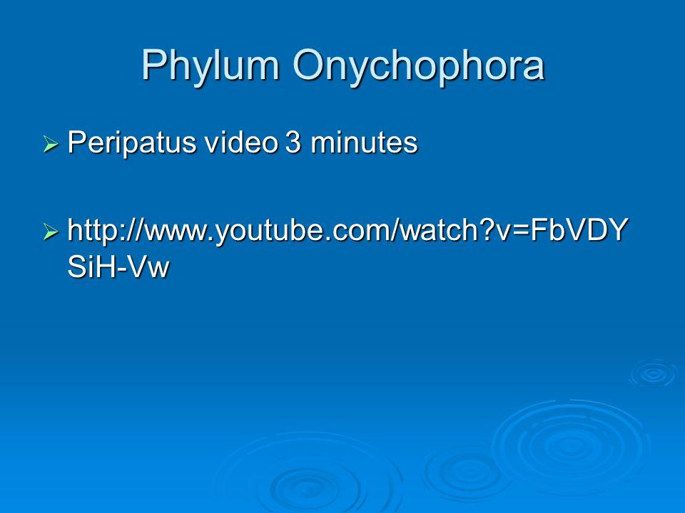 Phylum Onychophora Peripatus video 3 minutes