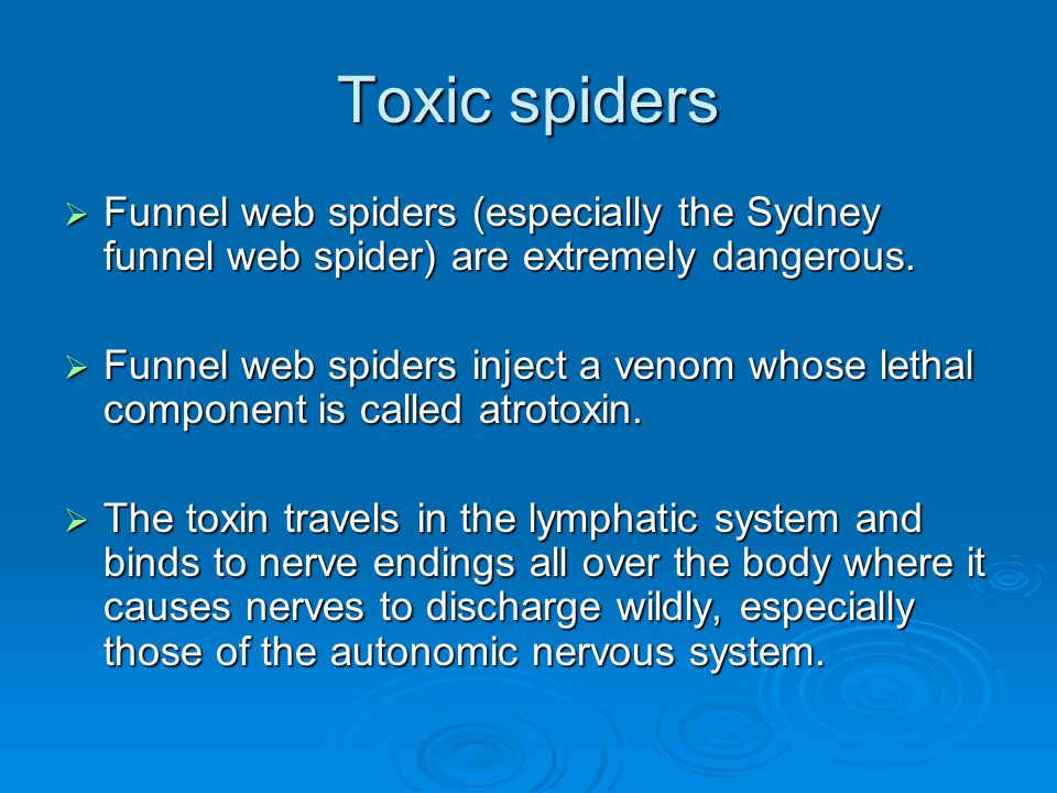 Toxic spiders Funnel web spiders (especially the Sydney funnel web spider) are extremely dangerous.