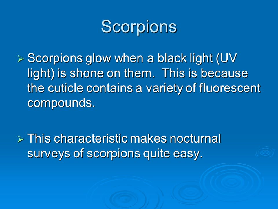 Scorpions Scorpions glow when a black light (UV light) is shone on them. This is because the cuticle contains a variety of fluorescent compounds.