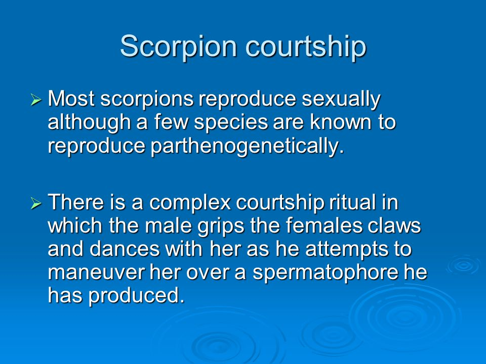 Scorpion courtship Most scorpions reproduce sexually although a few species are known to reproduce parthenogenetically.