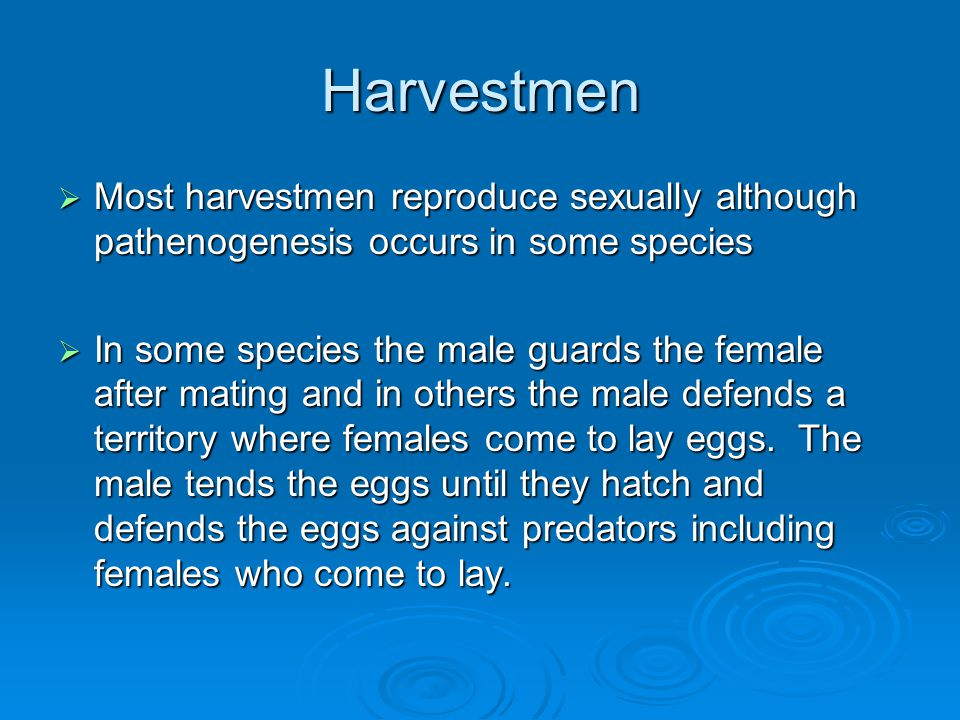 Harvestmen Most harvestmen reproduce sexually although pathenogenesis occurs in some species.