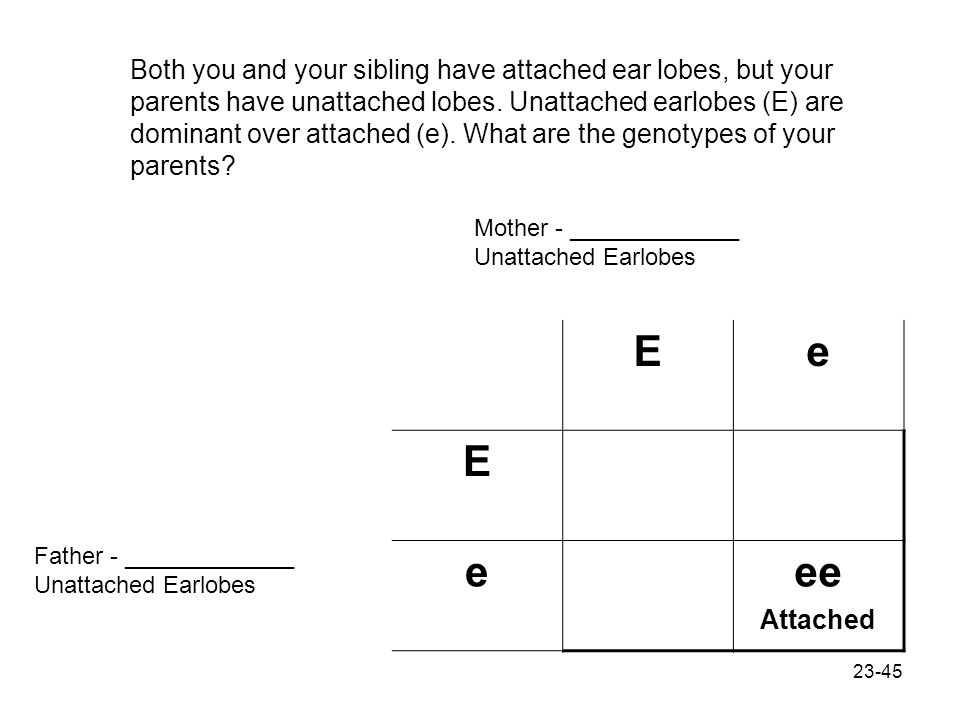 Both you and your sibling have attached ear lobes, but your parents have unattached lobes. Unattached earlobes (E) are dominant over attached (e). What are the genotypes of your parents