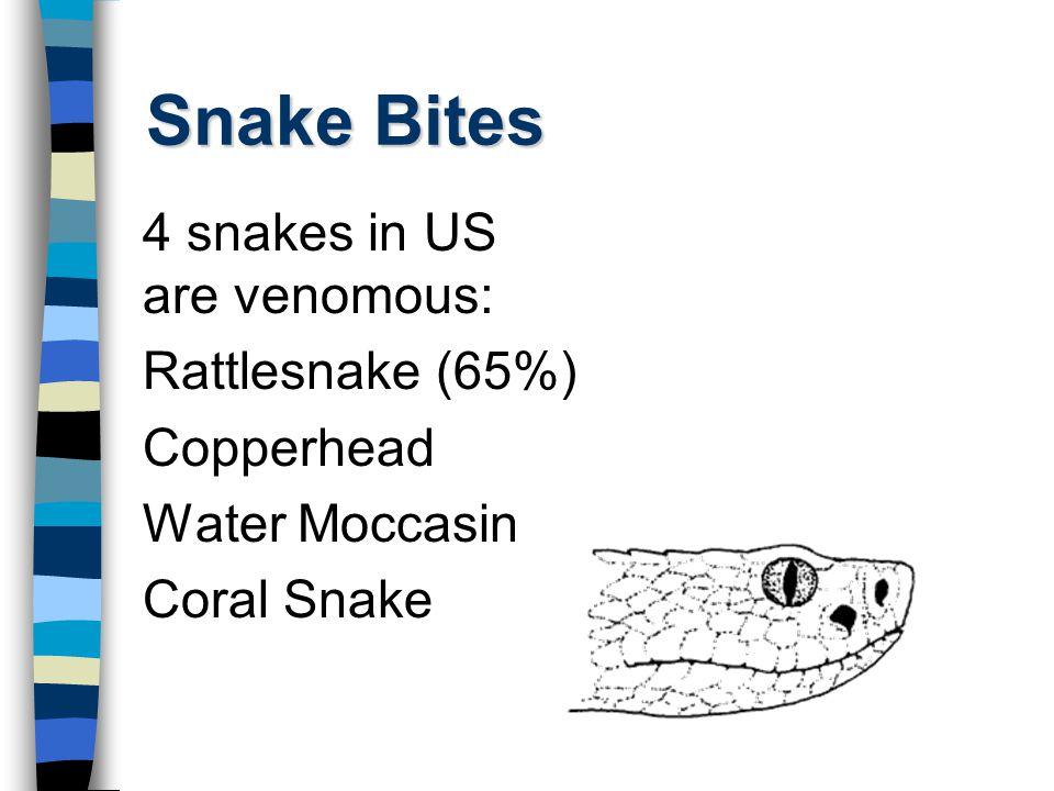 Snake Bites 4 snakes in US are venomous: Rattlesnake (65%) Copperhead