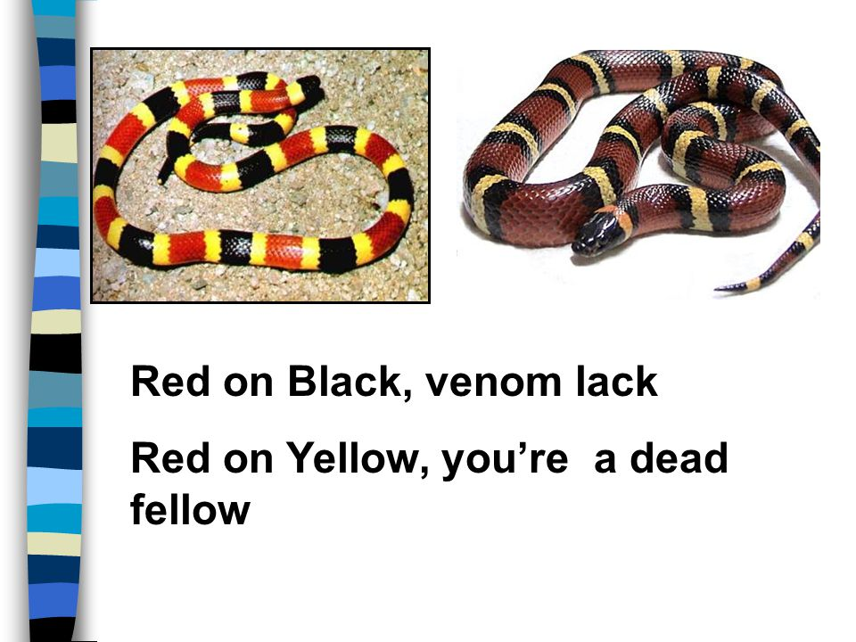 Red on Black, venom lack Red on Yellow, you're a dead fellow